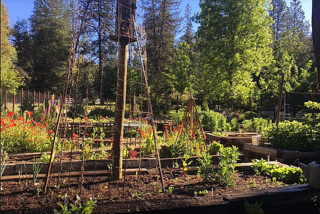 One of the many Master Gardener volunteers is Mona Copeland, an active member who credits her move to Nevada County with her love of gardening. Mona and her husband moved to this area from Los Angeles in 2010.